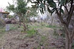 زمین مسکونی ۳۰۰ متری در حومه زیباکنار(کد:۶۷۹)