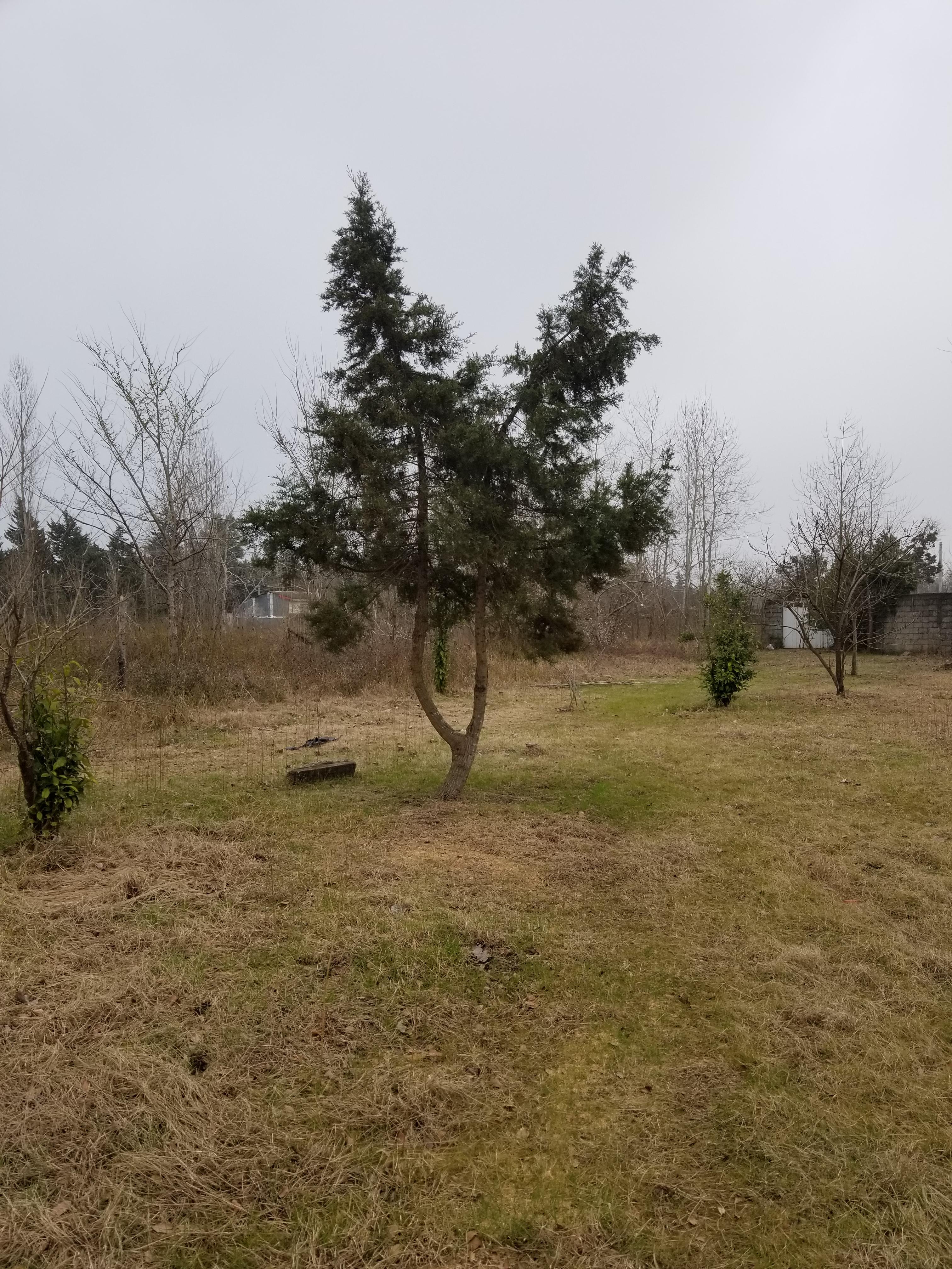 فروش زمین مسکونی در نوار ساحلی عسگراباد (137)